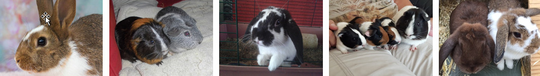 Een selectie van door Opvang Pruttel herplaatste konijnen en cavia's