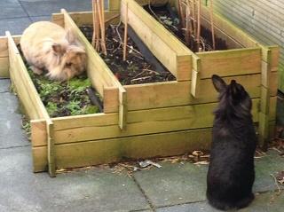 geplaatste konijnen